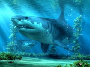 The Biggest Shark